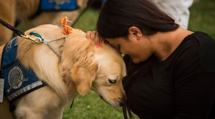 Labrador, el perro que lleva 28 años consecutivos siendo el preferido de EU (21:30 h)