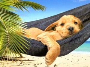 mascota-descansando