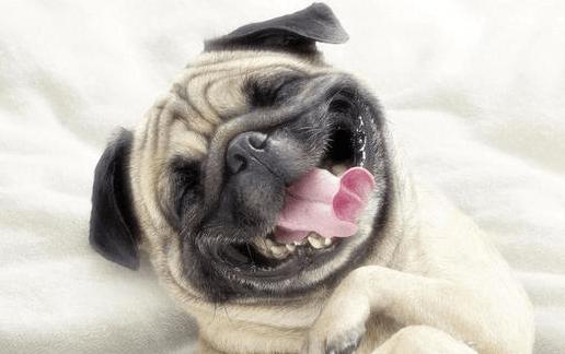 Cosas increíbles que quizás no sabías sobre tu perro (18:00 h)