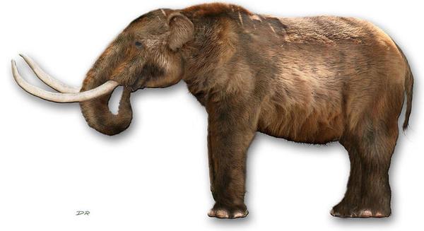 Los huesos de un mastodonte pueden reescribir la historia de América (18:00 h)
