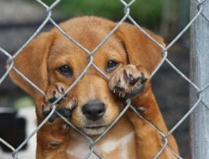 animal shelter puppy