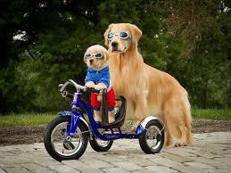 padre perro lentes