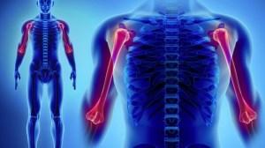 grasa corporal huesos