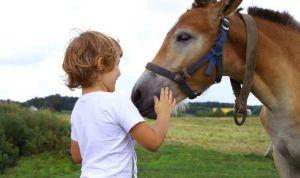 Los-caballos-terapeutas-especiales-para-tratar-multiples-patologias
