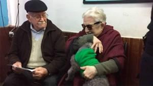 ancianos perrita