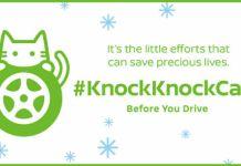 knockknockcats 563.jpg