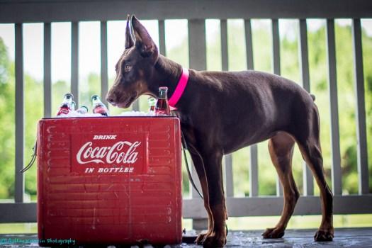 Laica Coke
