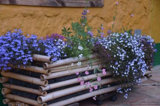 Flores macro