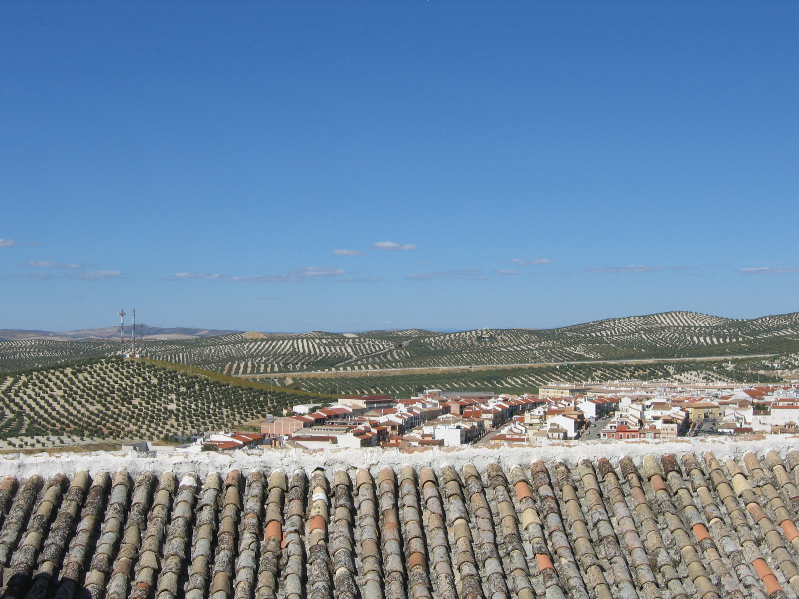 Oliviers d'Andalousie