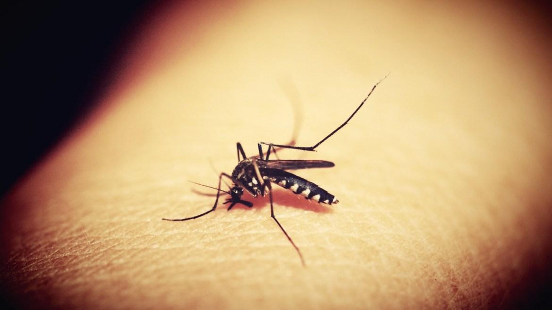 Un pequeño mosquito puede ser un gran problema