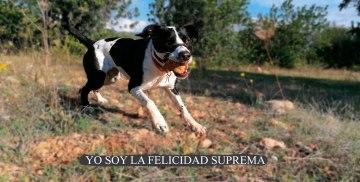 YO SOY LA FELICIDAD SUPREMA