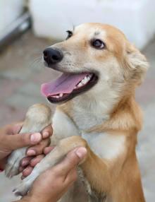 omani wadi dogs.jpg2