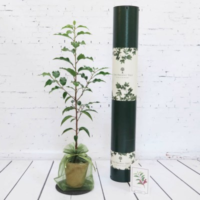 Image of a gift of planting a tree