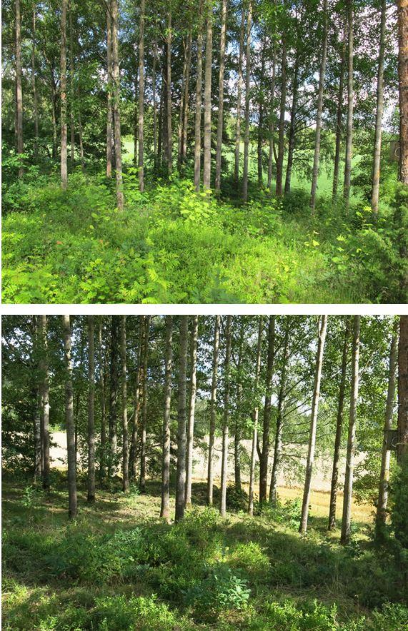 Rupakallio ennen ja jälkeen © Pirkanmaan maakuntamuseo