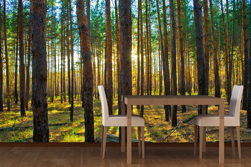 Tree House Interior Design