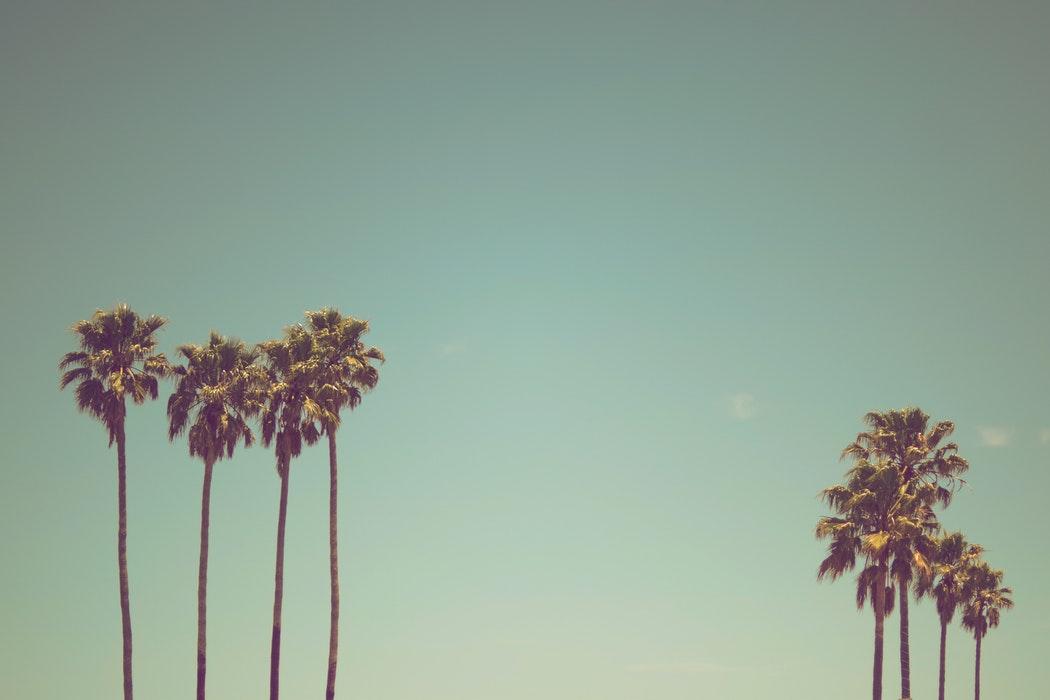 Vakantiebieb