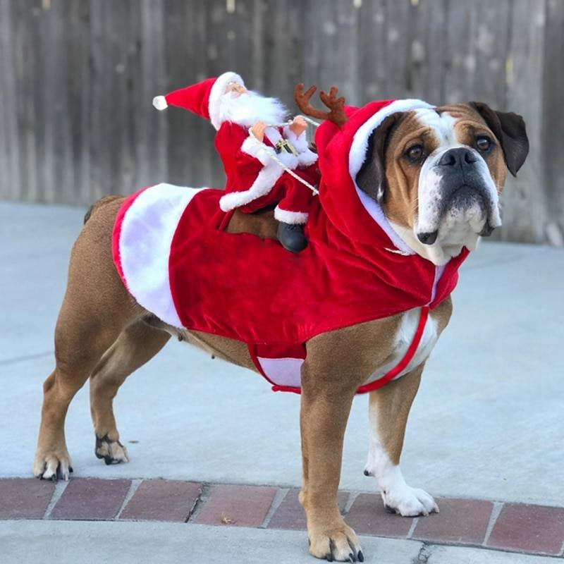 Dog's Funny Christmas Themed Costume Pet Christmas Costume and Toy
