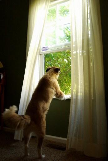 josie at the window2