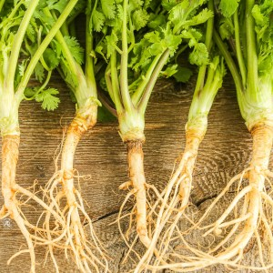 Secret Cooking Tip1: Coriander Roots