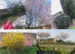 La finta giardiniera ... (VII)