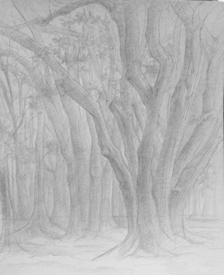 Study of an oak tree from direct observation in silverpoint