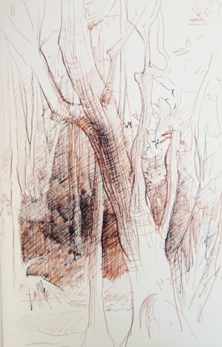 Adriana Burgos, sketchbook study of trees, Hannah Park, black and sepia pen on paper