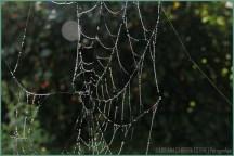 Trabajo de araña