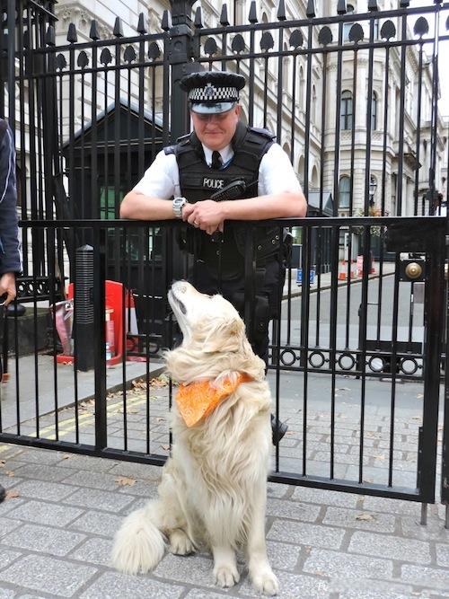 Adriana Licio's Dog in London
