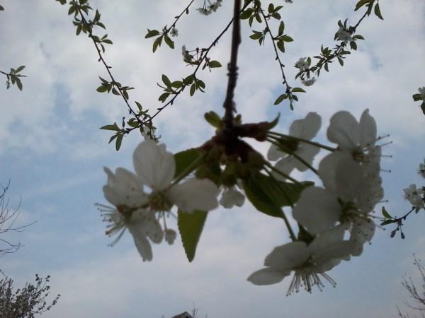 Floare de cais
