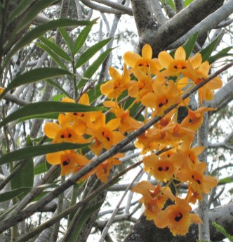IMG_2133-adriano-gronard-paisagismo-flor-flor-orquidea