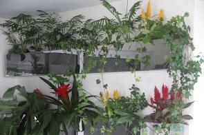 adriano-gronard-arquitetura-paisagismo-bromélias-palmeira-crista-de-galo-celosia
