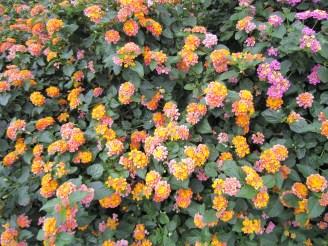 adriano-gronard-arquitetura-paisagismo-lantana-4-flores