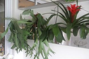 A planta cifre de veado com suas formas esculturais conferem exuberância à floreira desta varanda.