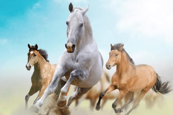 am sărit calul pe comunitatea fizioterapeuților din România