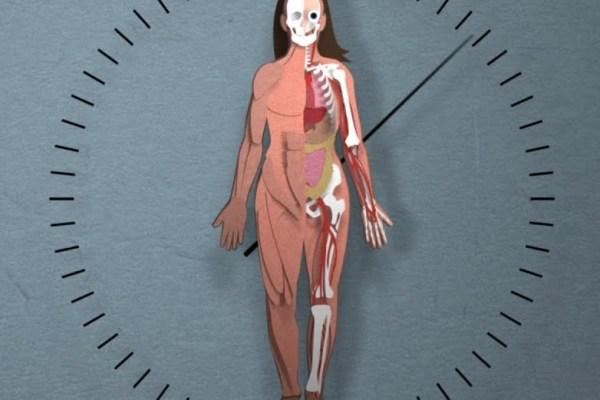 Corpul nostru se regenerează