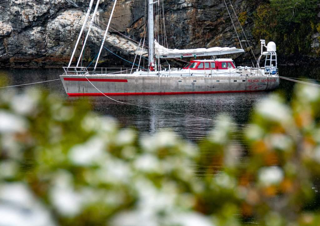 'Pelagic Australis' Beagle Channel Chile