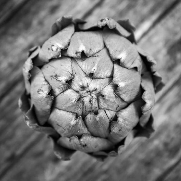 Globe Artichoke.