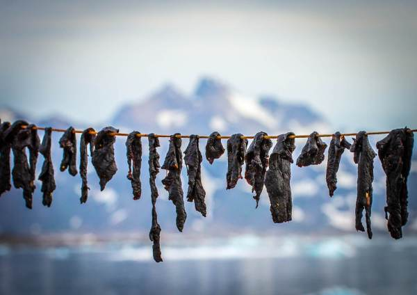 East Greenland Drying Whale Meat