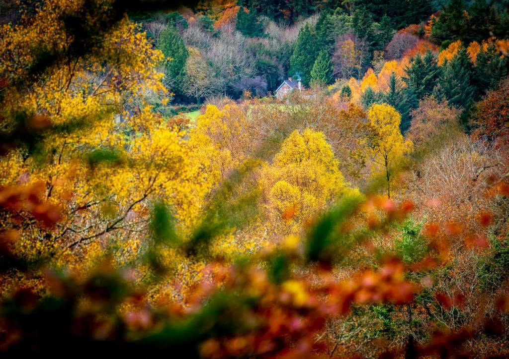 Autumn Splendour Vale of Avoca Wicklow