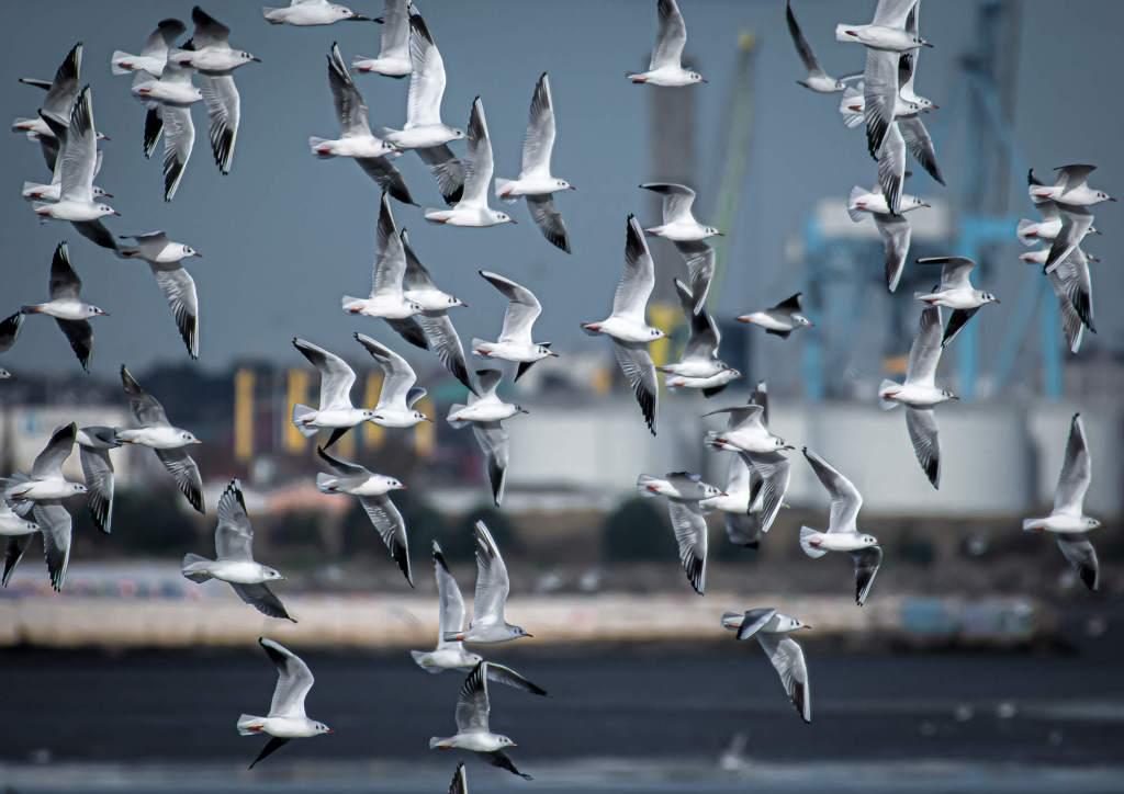 Gulls Booterstown Marsh Dublin