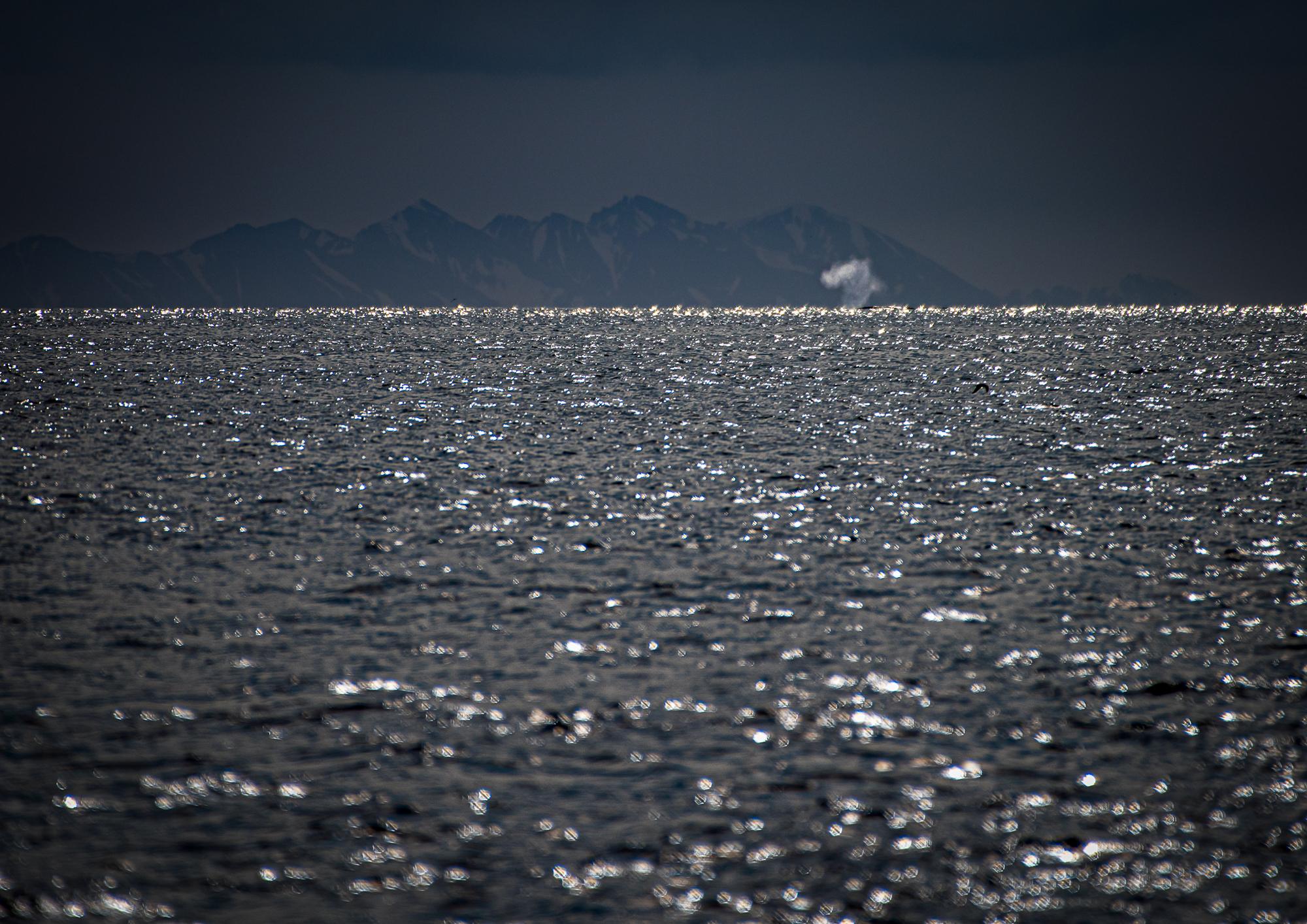Svalbard Spitsbergen Blue Whale Blow