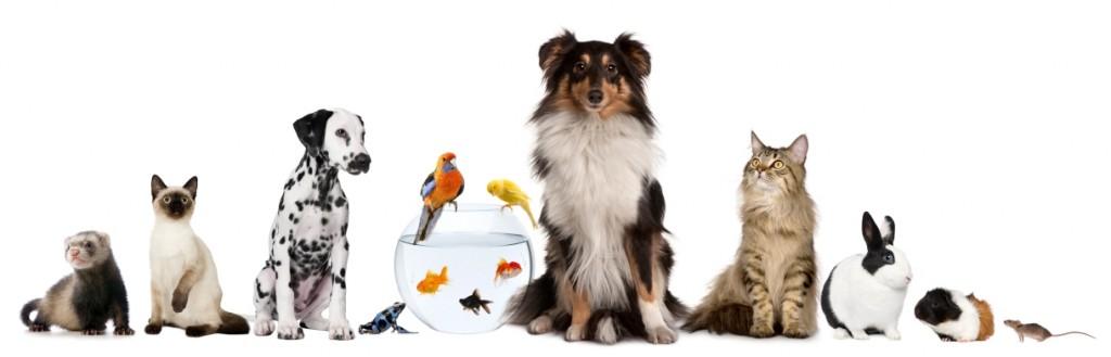 Por qué se celebra hoy el Día del Animal | Mascotas