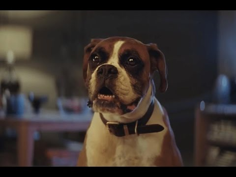 El Mejor Anuncio de Navidad 2016 #BusterTheBoxer – YouTube
