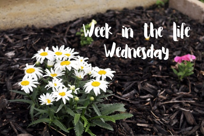 Wednesday Daisies