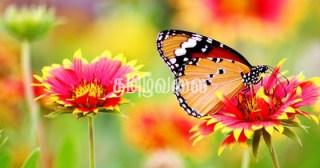 துயரமில்லா புன்னகை 1