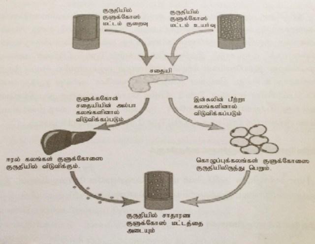 பகுதி I - நீரிழிவு நோய் (Diabetes) என்றால் என்ன மற்றும் நீரிழிவு நோயின் அறிகுறிகள் 1