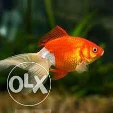 حوض سمك كبير..