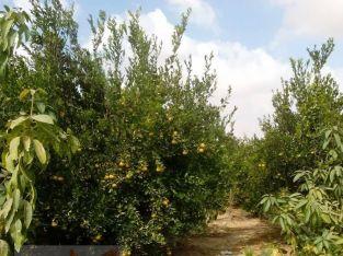 مزرعة للايجار ارض زراعية ومعلف لتربيه جميع انواع الحيوانات والطيور.طريق مصر اسكندرية