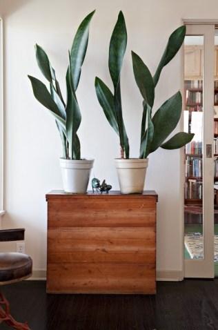plants diy3