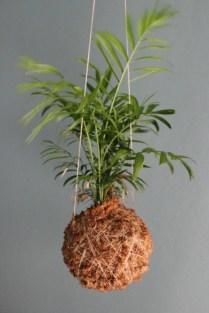 Mister-Moss-Palm